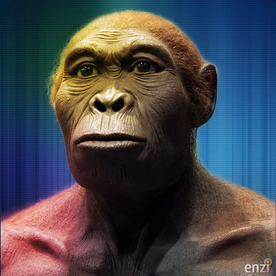 An example of Homo habilis. (Image credit: EnziMuseum.org).