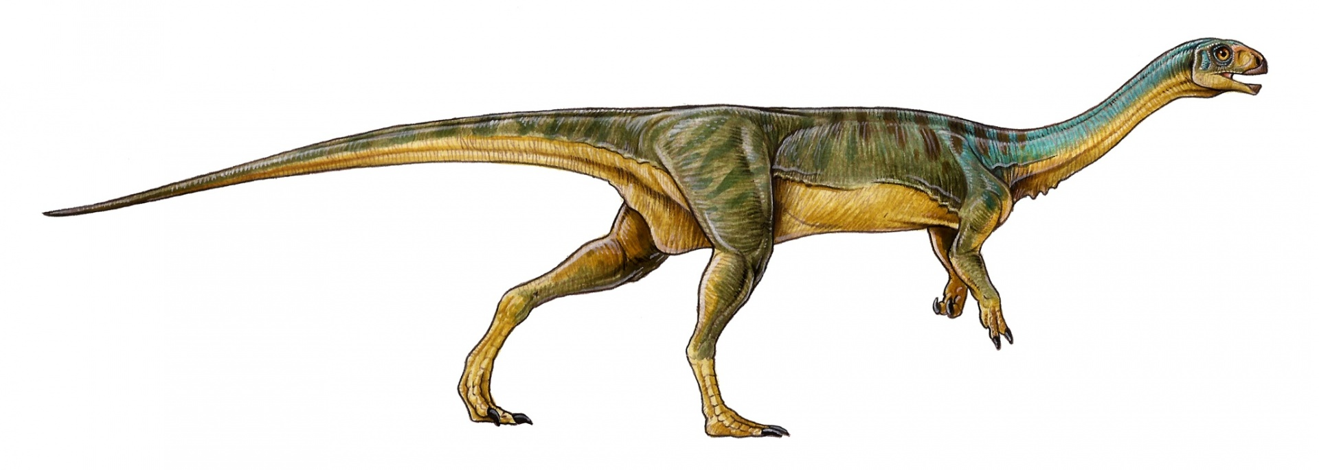 Chilesaurus diegosuarezi has a mixture of features from other prehistoric animals. (Image credit: Gabriel Lio).