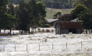 That's not snow, it's spider webs! (Image credit: Daniel Munoz/Reuters).