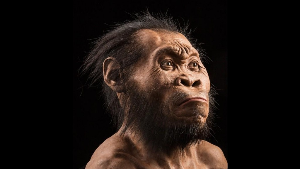 A reconstruction of how Homo nadeli would have looked, created by palaeo-artist John Gurche. (Image credit: National Geographic)