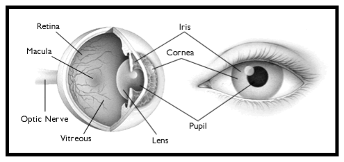 The eye is both simple and complex. (Image credit: http://www.internal.schools.net.au/edu/lesson_ideas/optics/optics_wksht2_p1.html).